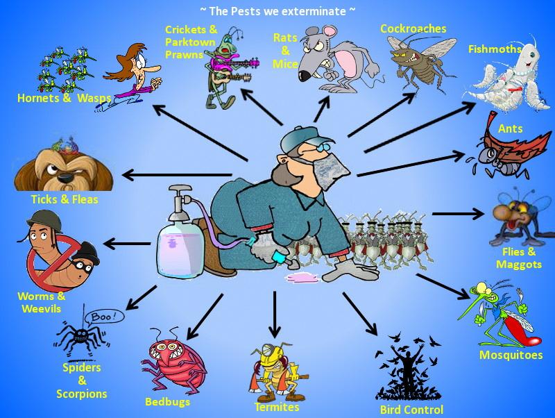 Bug Man - The Pests we Exterminate