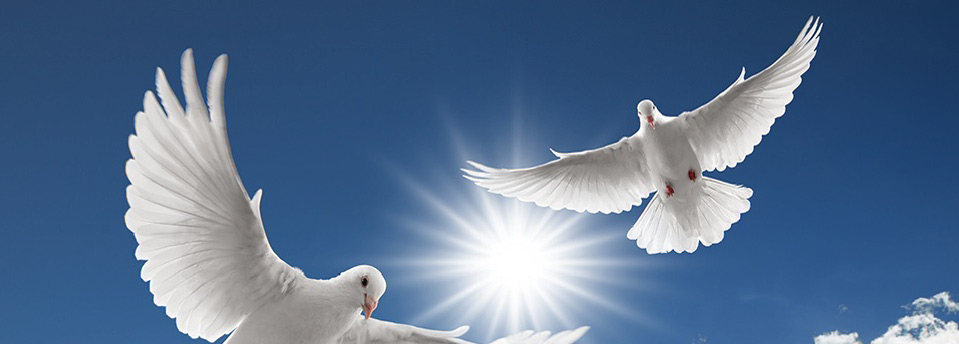 Doves funerals - white doves